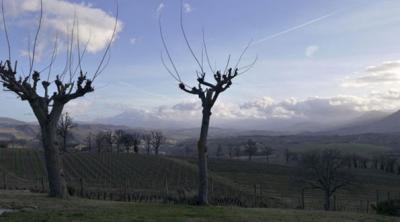 Verdicchio di Matelica | visiting Sergio Marani