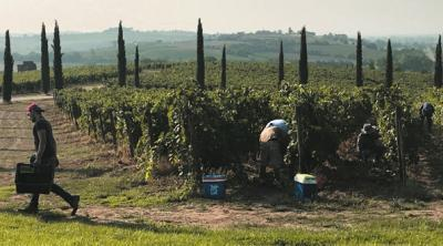 The Chianti Classico Tour and the Syrah