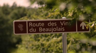 The Gamay and the sacred ritual of drinking wine in Beaujolais