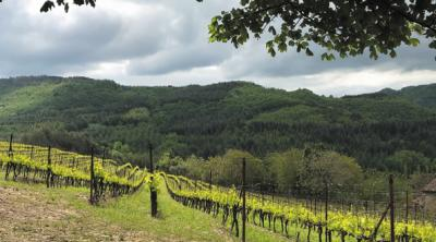 The unknown Romagna: the redemption of Modigliana wines